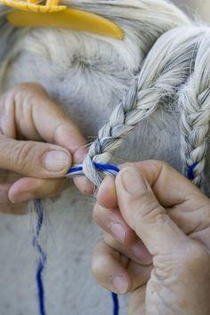Horse Mane Braiding Step 6