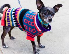 5 Classy Sweaters To Make Your Dog Into a Darling Winter Dumpling
