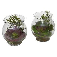 Succulent w/Fluted Vase (Set of 2)