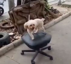 Gotta get my steps in Funny Animal Videos, Cute Funny Animals, Funny Animal Pictures, Cute Baby Animals, Animal Memes, Funny Dogs, Animals And Pets, Cute Puppies, Cute Dogs