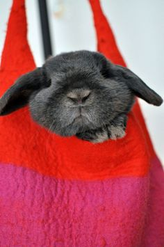 bunny in a  red and pink bag