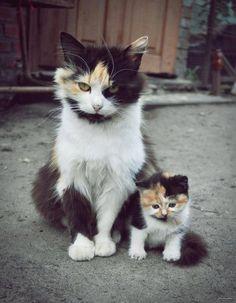 Esta chica que le está enseñando a su pequeño cómo hacer su mejor cara feroz: | 22 ocasiones en que los gatos han sido mejores padres que los humanos