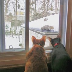 Cats plotting how they will tackle the squirrels come summer. #InstaTags4Likes #cat #cats #kitten #kittens #catsagram #catstagram #instagood #pet #pets #animal #winter #petstagram #petsagram #photooftheday #catsofinstagram #ilovemycat #instagramcats #catoftheday #caturday #lovecats #lovekittens #adorable #catlover #instacat #tortie #oriental #tw #pin