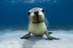 Honorable Mention Portrait Category|Underwater Photography Guide