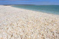 A shore full of Shell