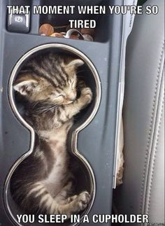I know I've been this tired before...but I would never fit in a cup holder.