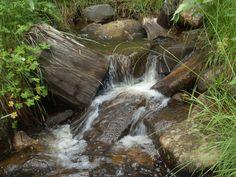 Soldiors Creek, Mt Graham, Safford, Az by candy clonts