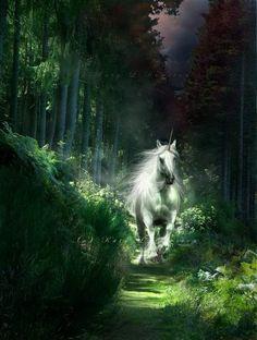 Ideas For Fantasy Art Fairies Mythical Creatures Forests Unicorn And Fairies, Unicorn Fantasy, Unicorn Art, Majestic Unicorn, Beautiful Unicorn, Beautiful Horses, Magical Creatures, Fantasy Creatures, World Of Fantasy