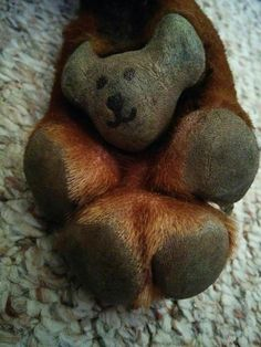 Doberman foot pad is a bear