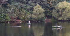 Swim in a Lake, Without Leaving the City - The New York Times