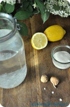 Limonade de k fir au citron frais et touche de miel for Plante kefir