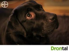 An exceptionally adorable dog with a golden heart! #cutedog #dog #mybestfriend #specialroles #drontal