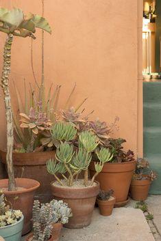 To the Point - Amanda Marsalis Hosts an Alfresco Dinner Party - Lonny Succulent Landscaping, Succulent Gardening, Succulent Pots, Cacti And Succulents, Garden Pots, Container Gardening, Outdoor Pots, Outdoor Gardens, Balcony Plants