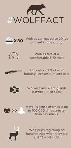 Facts About Wolves                                                                                                                                                                                 More