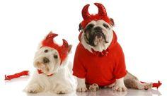 Moda en Halloween para perros