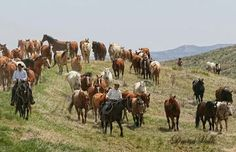 Moving the Horses to Summer Pastures.. Eatons' Ranch