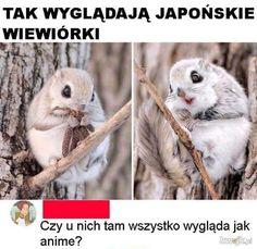 Cute Little Animals, Cute Funny Animals, Pictures Of People, Funny Pictures, Wtf Funny, Funny Memes, Polish Memes, Big Cats Art, Anime Mems