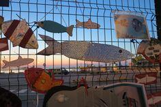 i pesci nella rete Ancona Italy