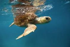heron island - to watch the baby turtles hatch