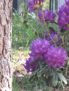 The beauty of spring! http://www.napaandbordeaux.com/blog