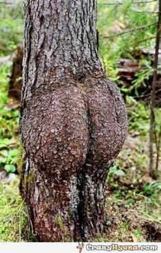 A funny picture of a tree which looks like a human body wathed from behind