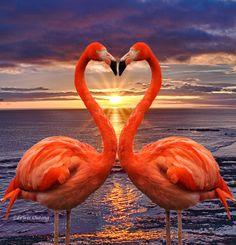 Foto Flamingo, Flamingo Art, Pink Flamingos, Flamingo Pattern, Pretty Birds, Beautiful Birds, Animals Beautiful, Wall Decor Pictures, Canvas Pictures