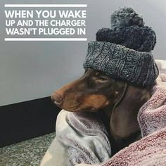 "Dachshund Quotes & Pictures (@mydachshundfamily) on Instagram: ""Like if this happened to you 😂 . 📷 @bambu.bassotto.cioccolato"""