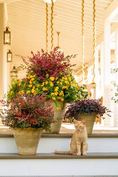Are your containers in need of a update? Our garden lifestyle expert Carmen Johnston offers tips to freshen your sun- and shade-loving containers just in time for fall.