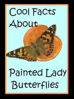 Cool Facts About Painted Lady Butterflies from Preschool Powol Packets