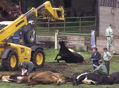 Burger King Cruelty Exposed - Cleveland Animal Advocacy | Examiner.com
