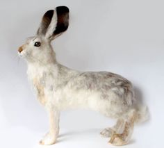 "A needle felted white tailed jack rabbit. He is 18"" long and 23"" high (to tips of ears). He has taxidermy quality eyes and horse hair whiskers. Needle felted with a single needle by Yvonne Herbst by Yvonne's Workshop."
