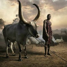 South Sudan. Photo courtesy of Marco Grob. These magnificent cattle and their…