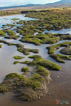 The Tamar Wetlands, Tasmania, Australia