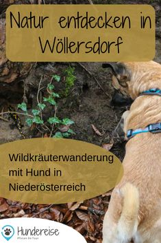 Salamander, Woodworking Tools, Dogs, Travel, Animals, Destinations, Animals Dog, Cats, Hiking Trails