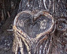 Tree bark heart ~ 100 years in the making