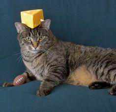 a cat in a very great hat Go Packers 95da7b9653eb