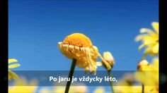 Jaro, léto, podzim, zima - karaoke Karaoke, Dandelion, Flowers, Songs, Music, Youtube, Musica, Musik, Dandelions