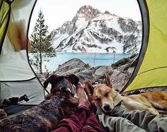 Nap time vibes are strong this morning. #campingwithdogs @briannamadia