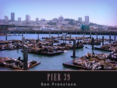 pier 39 san francisco.. again with the canters.. awesome.