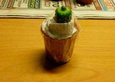 Colocación del film para sujeción del injerto sobre el pie Cactus Y Suculentas, Bonsai, Succulents, Vase, Plants, Grande, Cacti, Blog, Grafted Cactus
