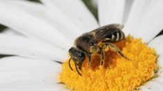 Do your part and save the bees with these 10 easy-to-grow flowers – NaturalNews.com