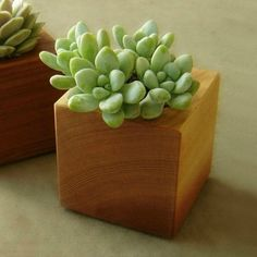 Cactus Planter, Cubist Modern Indoor Garden Decor, Small Wood Planter, Gift  for…
