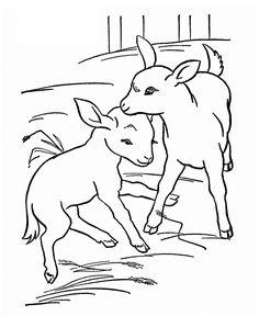 31 Best Goats Images On Pinterest
