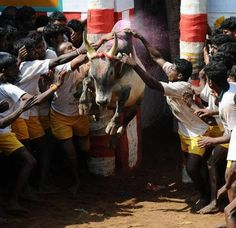 Chennai ungal kaiyil. As the supporters of #Jallikattu protest increases day by day Tamil Nadu Ministers hold talk with the protesters. #LatestUpdate #Chennaiungalkaiyil.