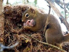 Mother squirrel tending to her baby