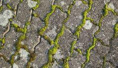La mousse envahit souvent les terrasses, s'incruste dans les interstices et est très difficile à éliminer. Pour vous aider à vous débarasser de cette mauvaise herbe de manière efficace, Côté Maison a fait le plein d'astuces !
