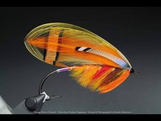 Orange Parson