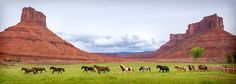 Bildergebnis für ranch horse USA