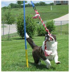 Dog Friendly Backyard, Dog Backyard, Backyard Ideas, Dog Training Books, Basic Dog Training, Training Dogs, Outdoor Dog Toys, Outdoor Dog Area, Dog Fun