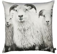 """Sheep pillow-- """"they train them for sheep fight clubs!"""" lmao"""